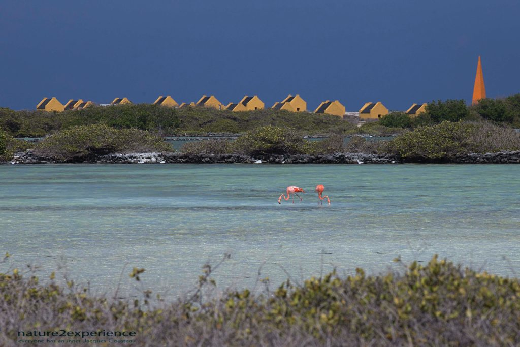 , Photography bonaire, Bonaire, slavehuts, flamingo's, photography