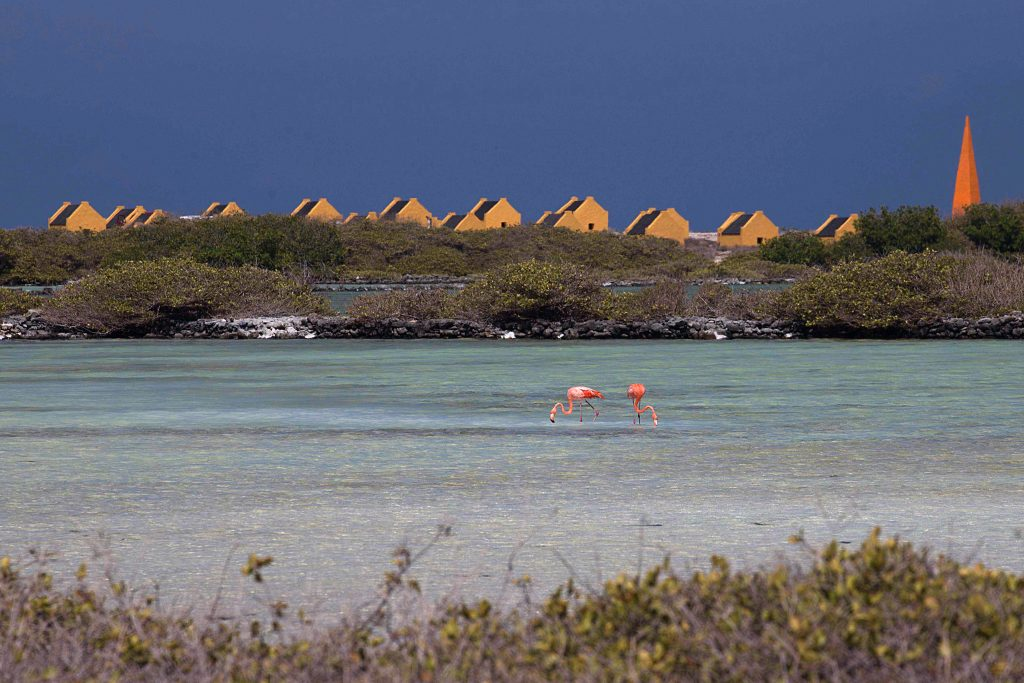 Photography workshops Bonaire & tours