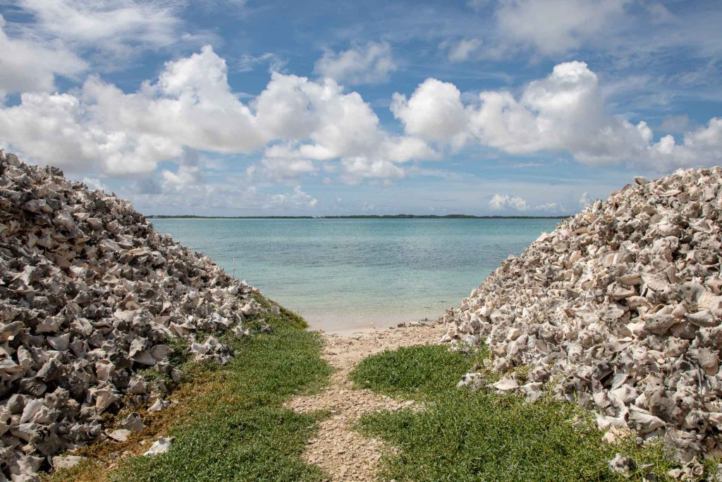 Bonaire Photography Tours. Taken pictures of our Washington National Slagbaai park