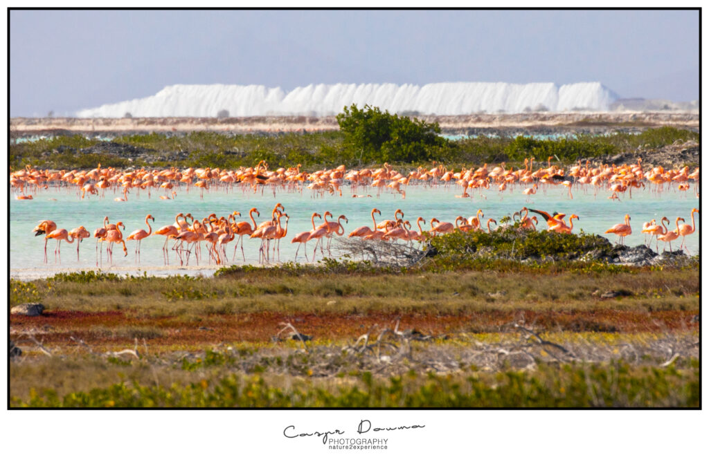 Flamingos, Photographer Bonaire, Bonaire photographer
