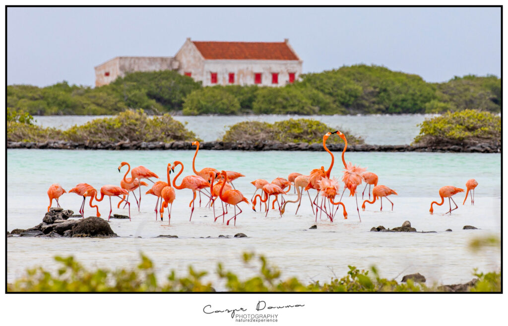 Bonaire Flamingo, Photographer Bonaire, Bonaire photographer