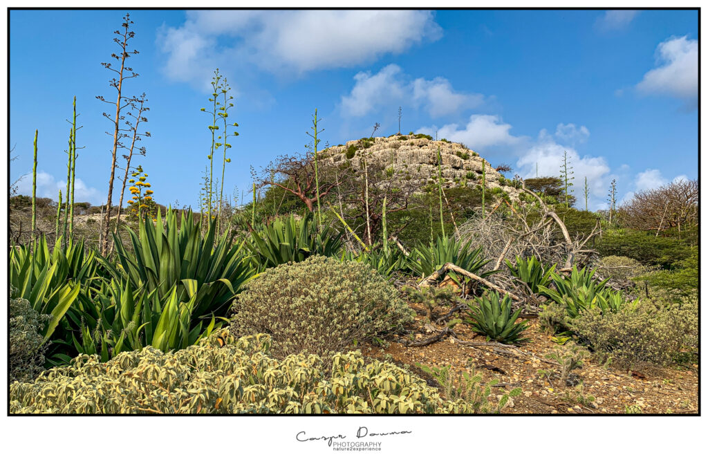 Chanti wawa hiking trail Bonaire, Photographer Bonaire, Bonaire photographer