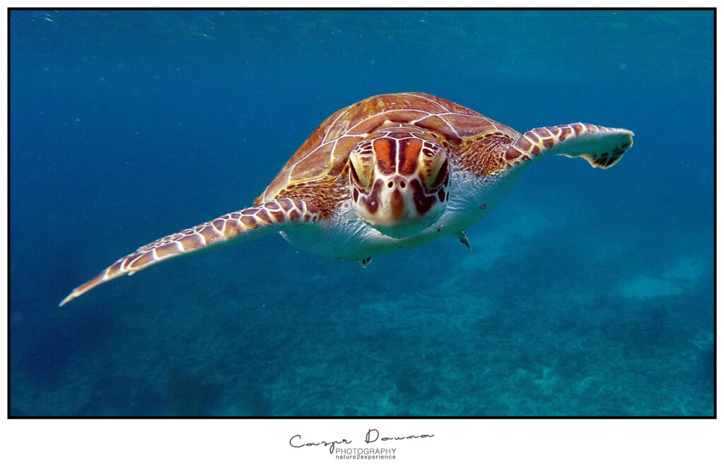 Turtle during diving on Bonaire, Photographer Bonaire, Bonaire photographer