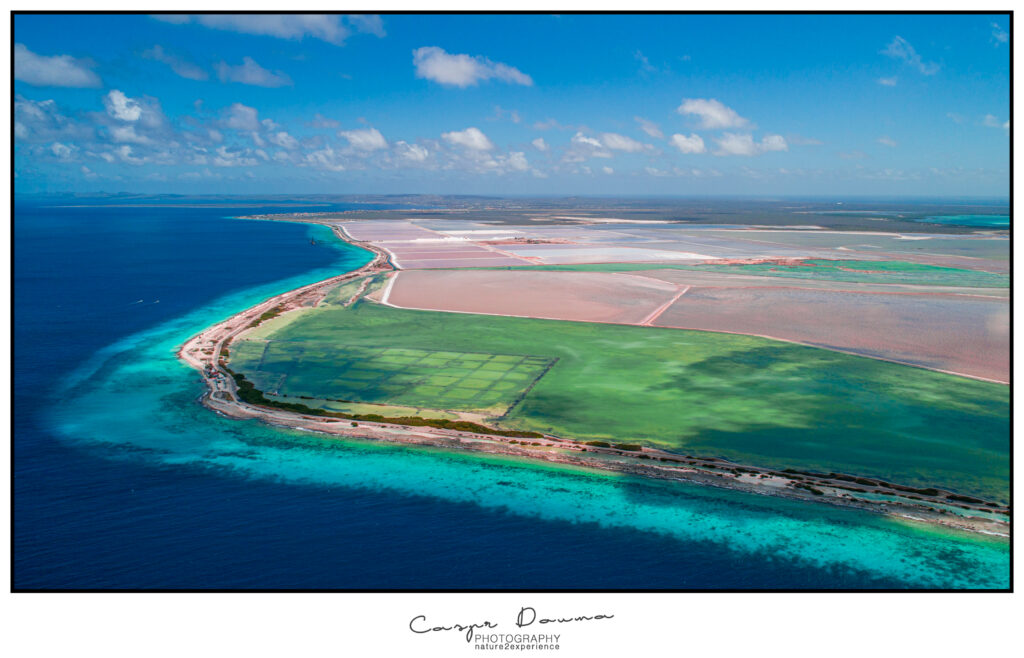 Bonaire photographer, Bonaire photography, tours on Bonaire Photographer Bonaire
