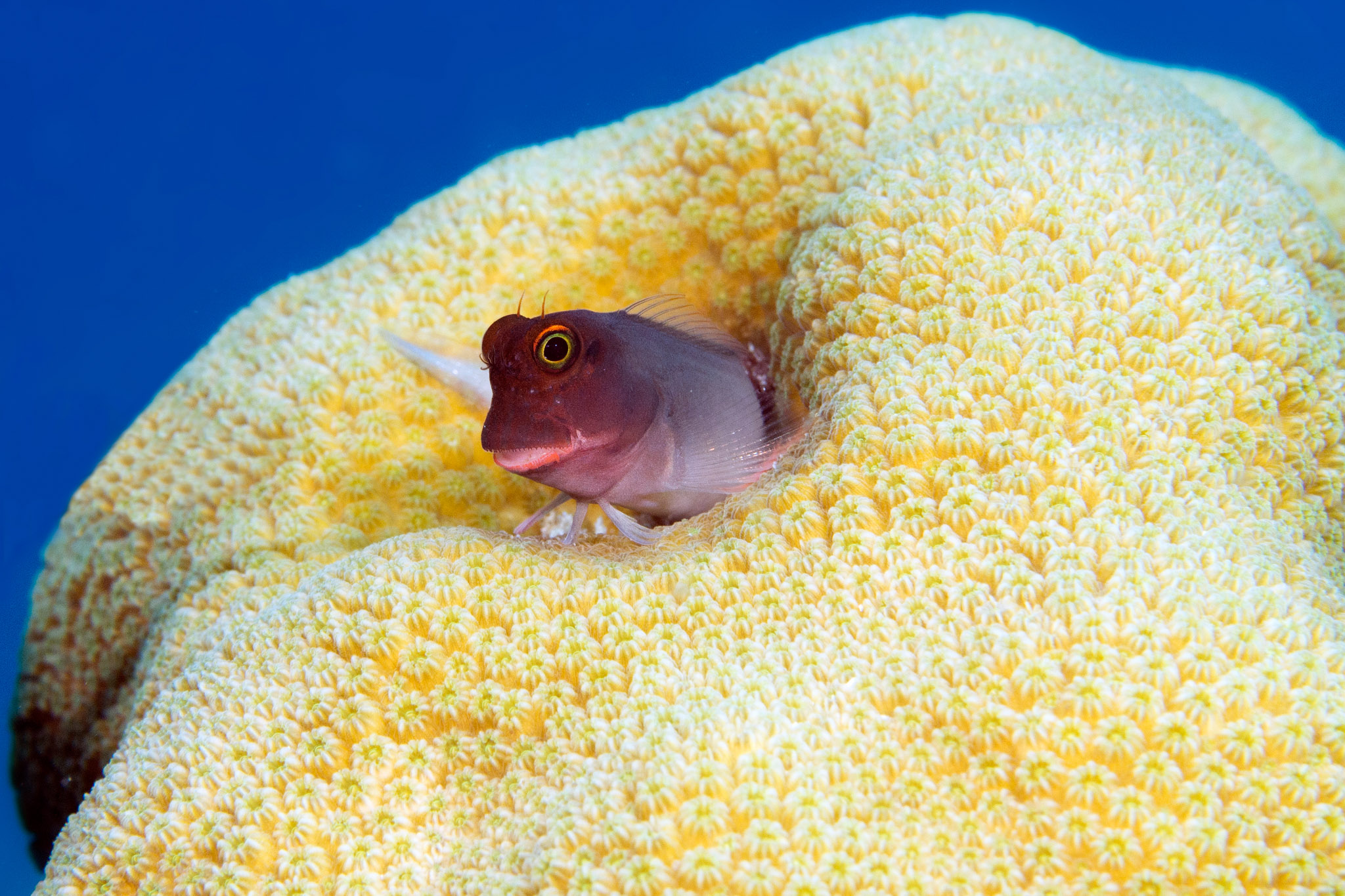 Goby Diving on Bonaire