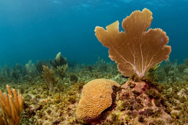 Coral on the east coast of Bonaire