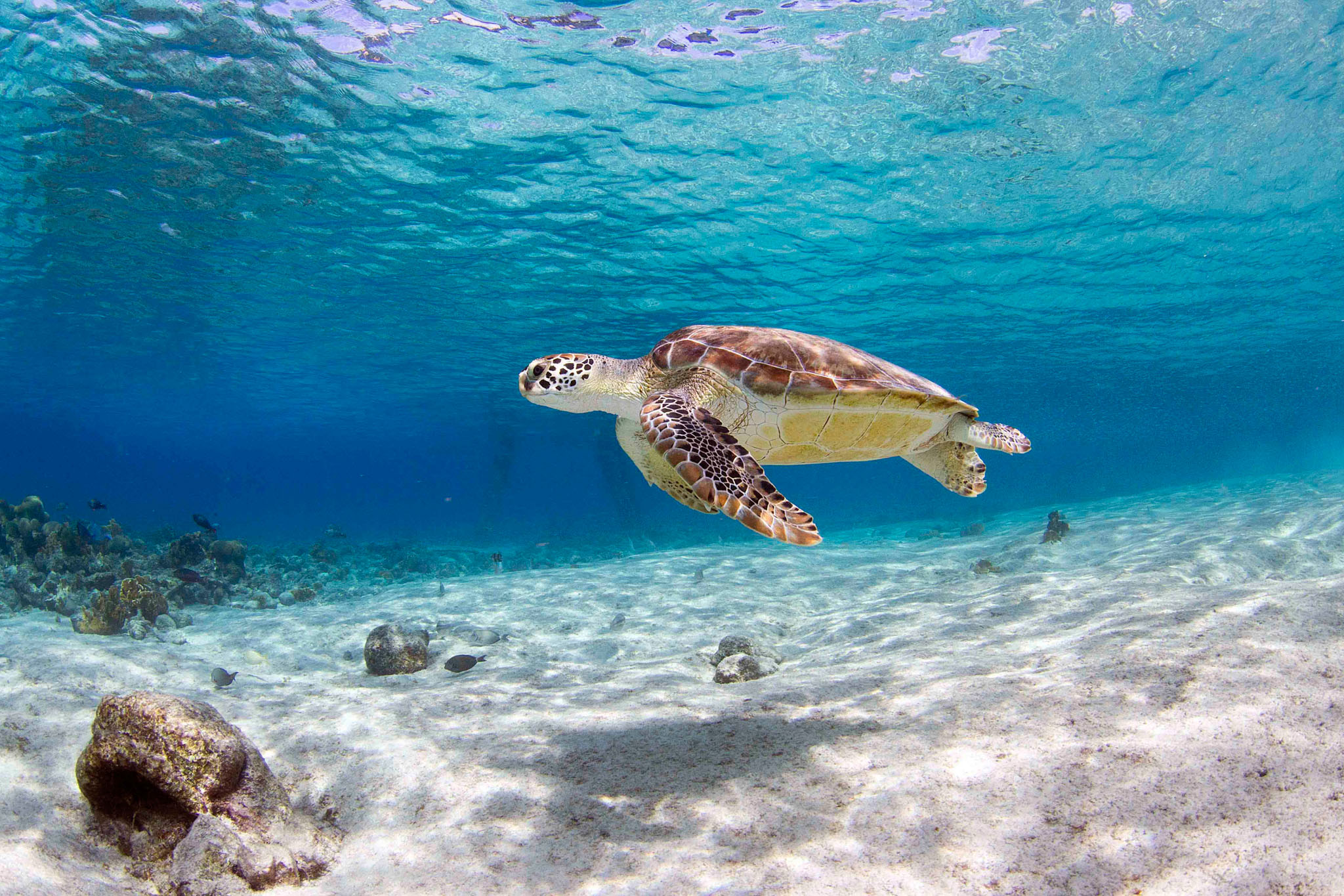 Turtles Bonaire