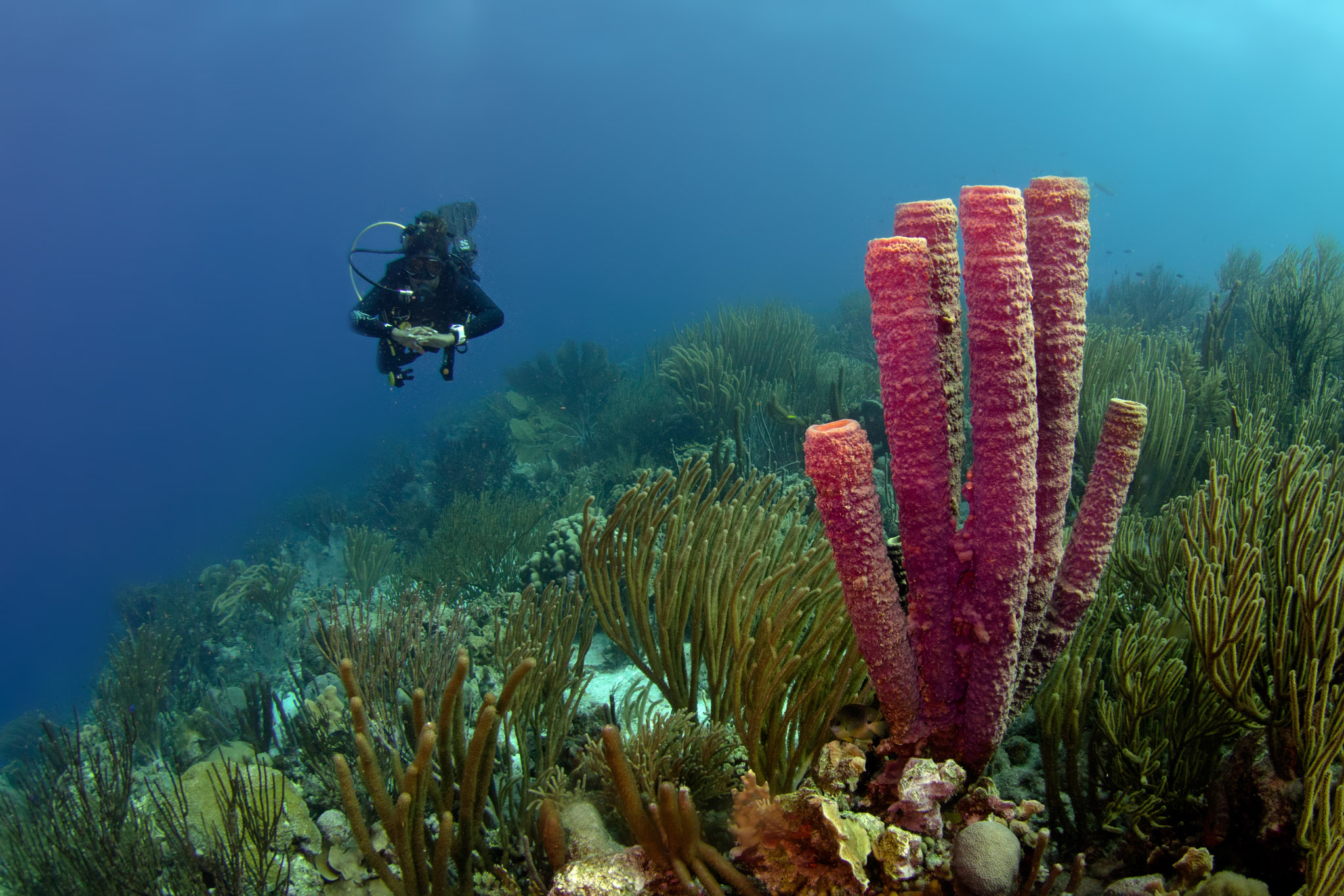 Diving on Bonaire