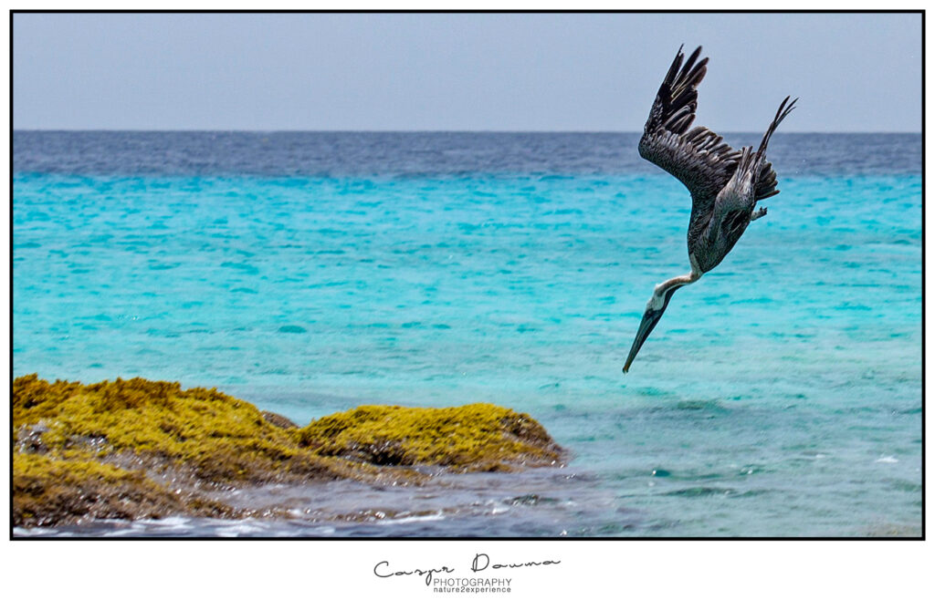 Bonaire photographer, Bonaire photography