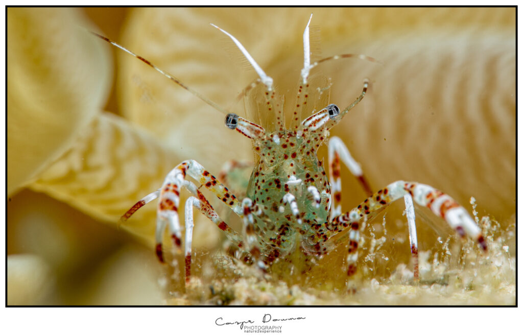 Photography on Bonaire, diving on Bonaire